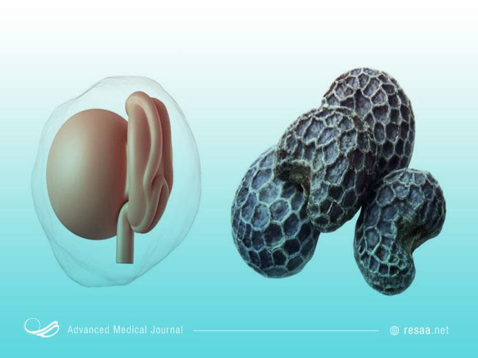 اندازه جنین در پایان ماه اول بارداری