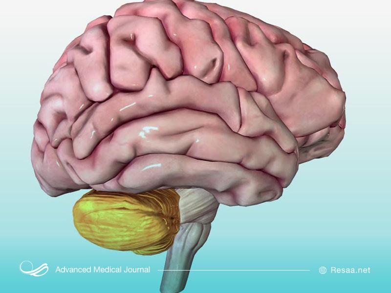 نمایی از ساختار مغز انسان