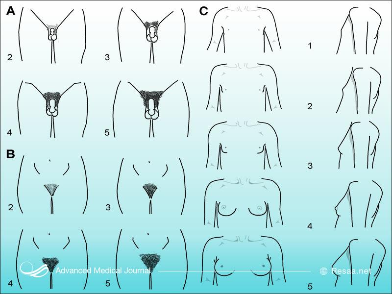 تغییرات بدن هنگام بلوغ