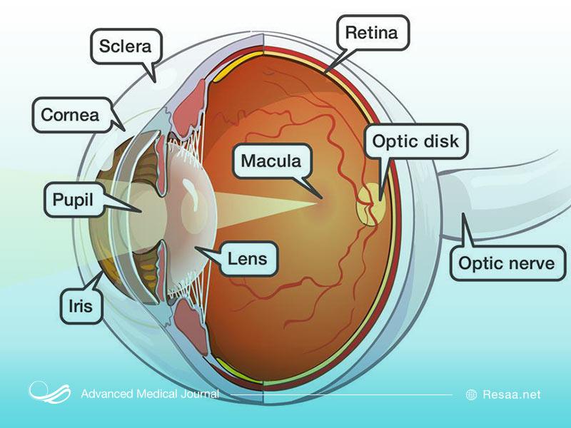 ساختار چشم انسان