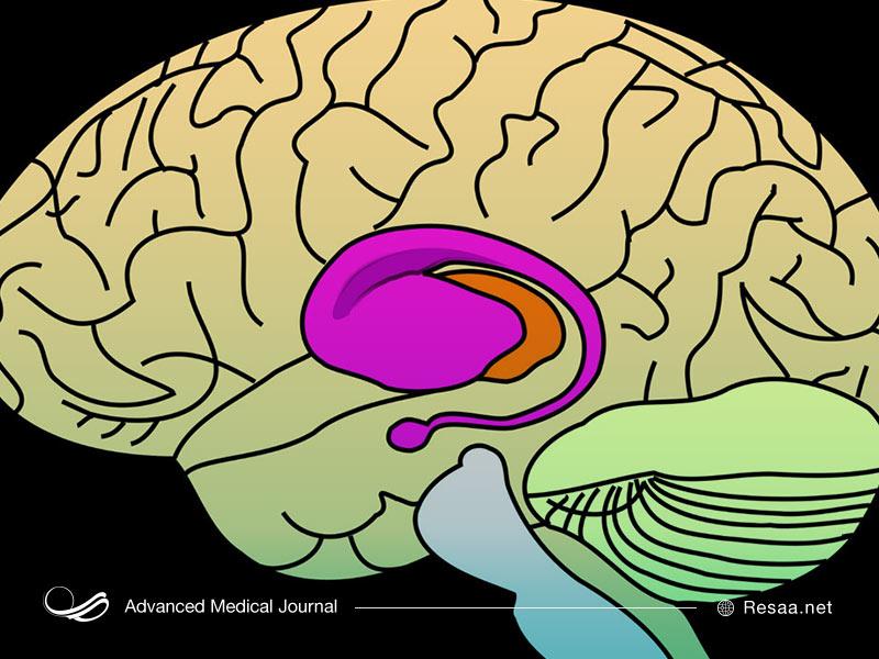 هانتینگتون میتواند باعث اختلال عملکرد مغز شود