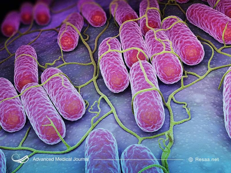 بیماری سالمونلا از طریق نوعی باکتری به وجود میاید