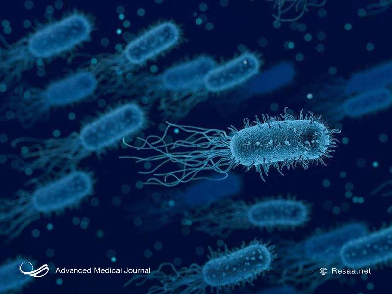 شکل باکتری تب مالت